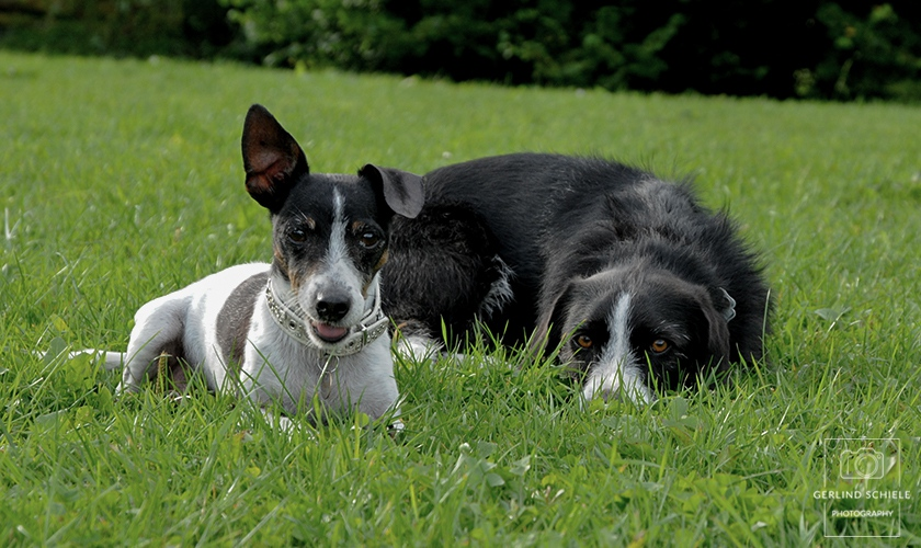 Hundefreundschaft Copyright Gerlind Schiele Photography +49 (0) 170 - 908 85 85